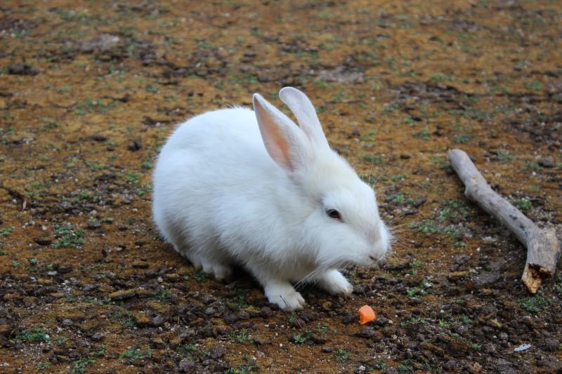 [ 広島旅行詳細 ] ウサギと毒ガスの島、広島県竹原市の大久野島(おおくのしま)へ行ってきた。