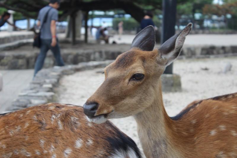 [ 広島旅行詳細 ] 厳島神社と表参道商店街のある宮島へ行ってきました。